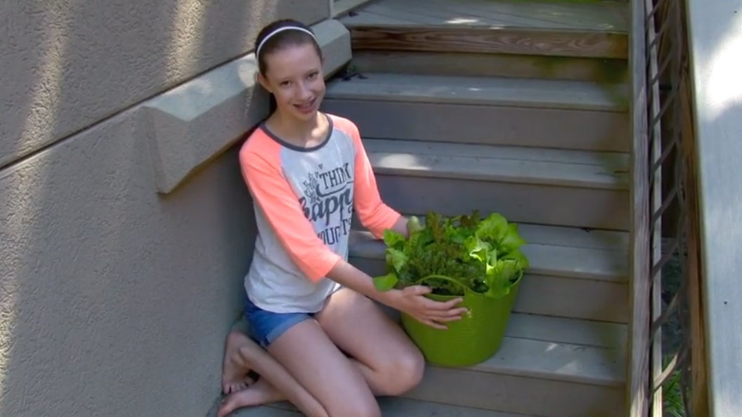 How To Grow Organic Lettuce Anywhere