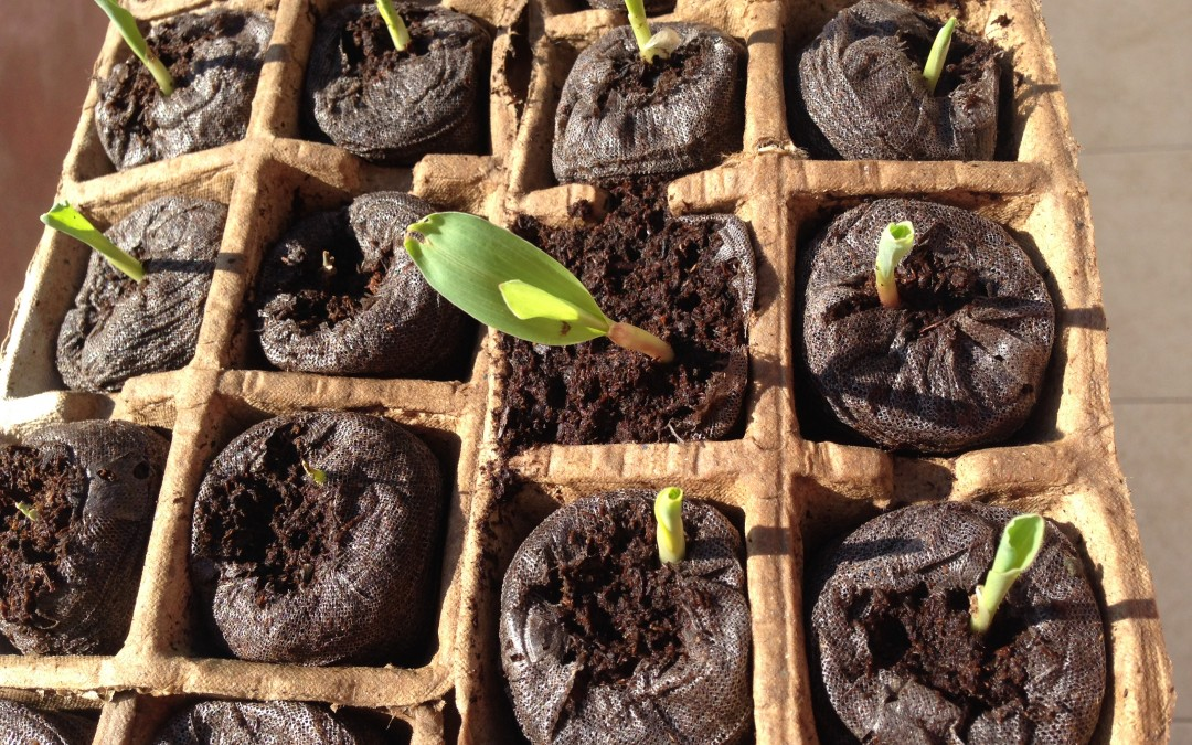 Seeds & Solutions in Haiti